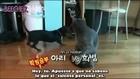 070902 Animal Farm con Super Junior Ep. 2 - 1 [SUB ESP]